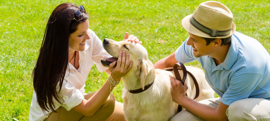 Dog Owners Guide to Summer Fun in Rockwall, TX