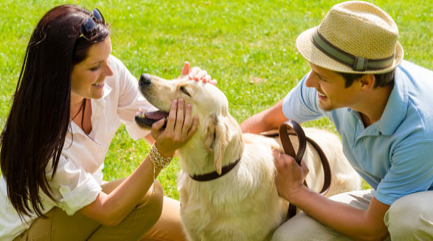 How to Celebrate National Dog Day near Rockwall, TX?